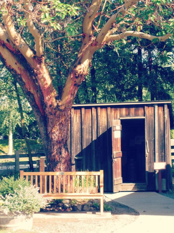 A Small flat roofed wooden building by an arbutus tree