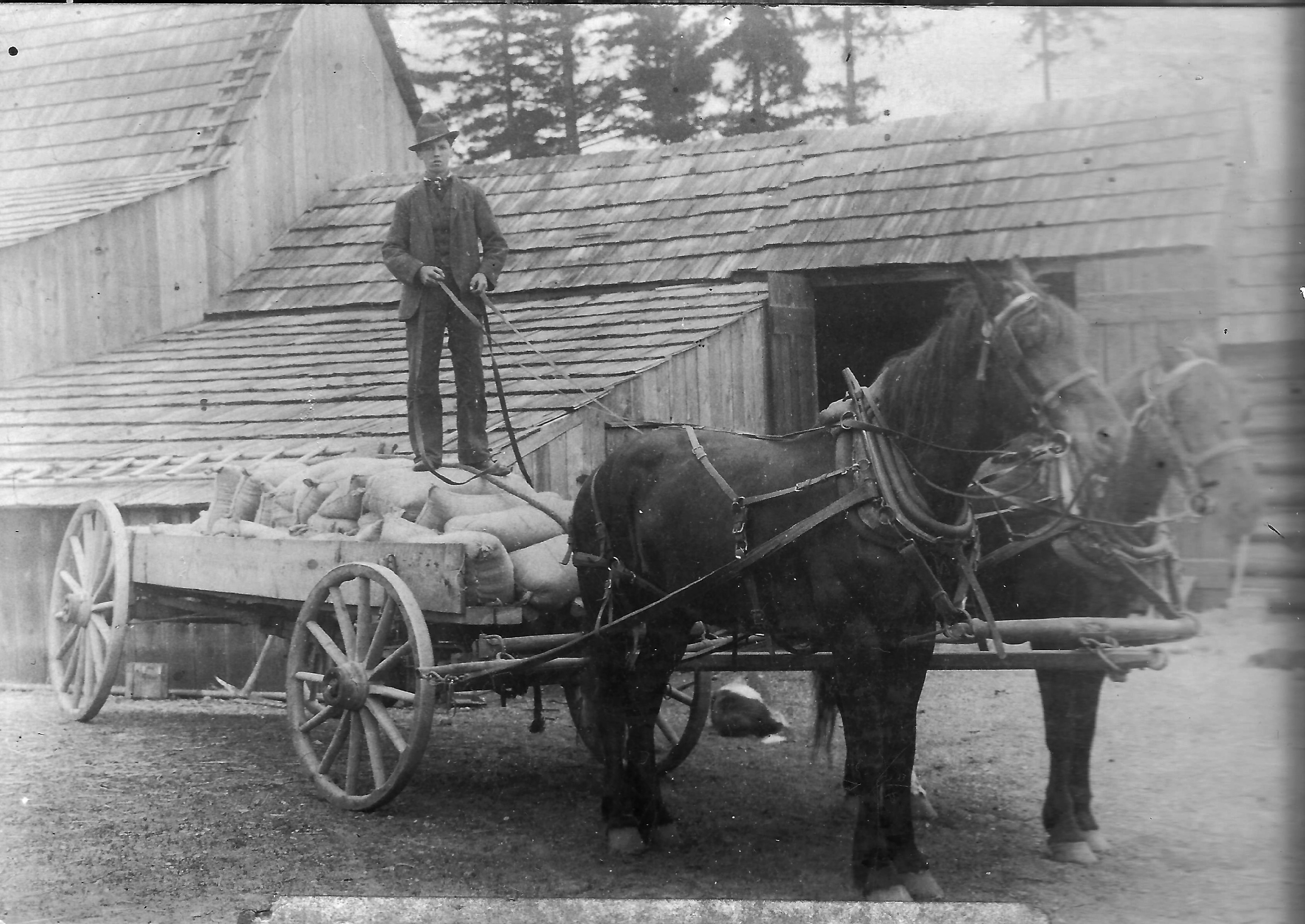 A young man standing on horse drawn cart